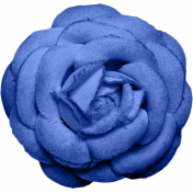 Reflections- Blue Rose