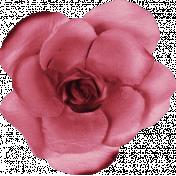 Shine- Hot Pink Paper Rose