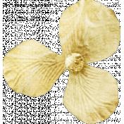 Shine- Little Gold Flower