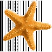 starfish illustration