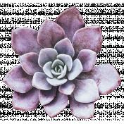 Fresh Start Elements- Succulent 2