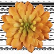 Cozy Kitchen Orange Succulent Flower