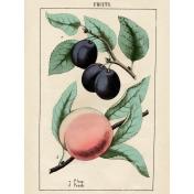 Cozy Kitchen- Fruit 3x4 Filler Card