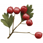 Colored Berry cluster- layered