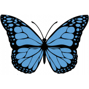Blue Butterfly Illustration Endures