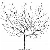 Autumn Day - Stamp Tree Wide