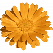 Plum & Marigold - Marigold Sticker Light