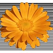 Plum & Marigold - Marigold Sticker Bright