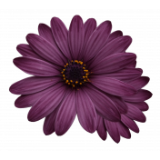 Plum & Marigold- Purple Daisy Sticker Dark