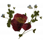 Livia's Pressed Flowers