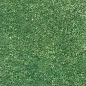 Grass (Turf) Textured Paper