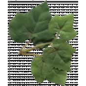 Spring Fever Leaf 061