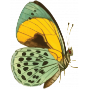 Picnic Day Print Butterfly2