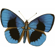 Picnic Day Print Butterfly3
