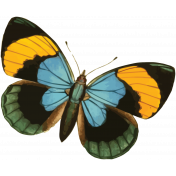 Picnic Day Print Butterfly4