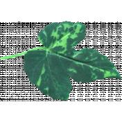 Ramadan Leaf 073