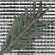 Winter Day Pine Branch 1