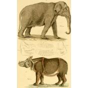 Ephemera African Animal 1