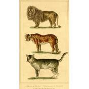 Ephemera African Animal 6