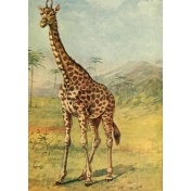 Ephemera African Animal 8