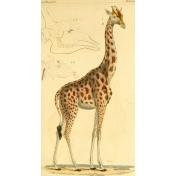 Ephemera African Animal 9