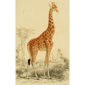 Ephemera African Animal 12
