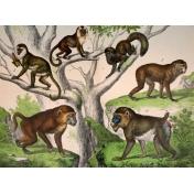 Ephemera African Animal 14