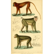 Ephemera African Animal 15