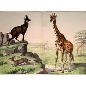 Ephemera African Animal 18
