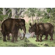 Ephemera African Animal 19