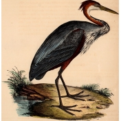 Ephemera African Birds 1