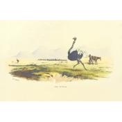 Kenya Vintage Journal Card 09- 4x6