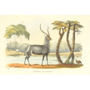 Kenya Vintage Journal Card 10- 4x6