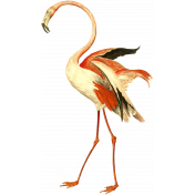 Kenya Elements flamingo