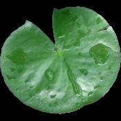Pond Life Lily pad 01