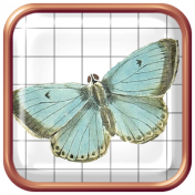 Seriously Butterflies Elements- Square Brad 04