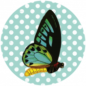 Seriously Butterflies Elements- Circle 04
