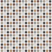 BYB Aminals- Cat Paper 2