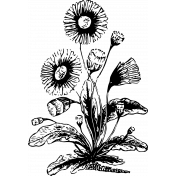 Vintage Images- Flower 14