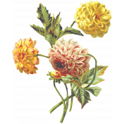 Seriously Floral 2 Illus- Floral 4