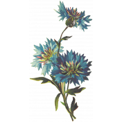 Seriously Floral 2 Illus- Floral 9
