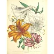 Seriously Floral #2 Pocket Cards Kit- JC 07