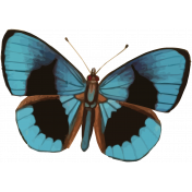 The Good Life: July Color Stamps- Butterfly 1