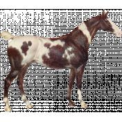 Go West Horses- Horse 7