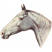 Go West Horses- Horse 6