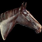 Go West Horses- Horse 5