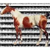 Go West Horses- Horse 3