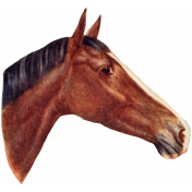 Go West Horses- Horse 1