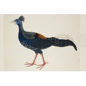 The Good Life Sept Elements- Card Bird