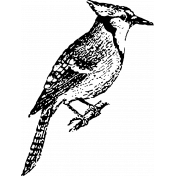 Birds In Snow Stamps- Blue Jay Stamp